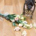 猫のイタズラ対策は大丈夫?9つの危険な事