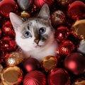 クリスマスまであと何日?ポール&ジョーボーテの猫のアドベントカレンダ…