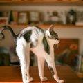 これあれだ!縦に伸びる子猫への『既視感』Twitterで話題に