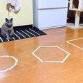 【やってみた】猫が思わず入っちゃう「猫ホイホイ」