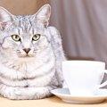 猫カフェに行く時はどんな服装で行く?知っておきたい4つの事