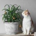 猫にアロエを食べさせたり塗ったりしても大丈夫?