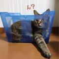猫用入って遊べる段ボールバスを作ってみた!