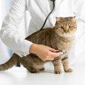 猫の脳腫瘍とは 症状と治療の方法