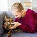 太った猫が好む食べ物の3つの特徴