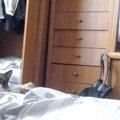 恐怖!?そろぉ〜りと現れてそろぉ〜りと消える猫