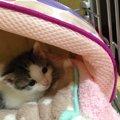 家の壁に挟まって出られなくなった子猫との生活 ~生後0日-1ヶ月の育…