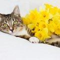 お別れした猫の初盆をお迎えするには?必要な物やお作法