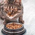 偏食ぎみの猫は食べてくれるものだけあげていてもいいの?