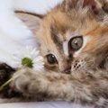 愛猫もチェックしてみよう!猫の「人相・手相」占い