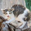 猫が信用していない人にする仕草や行動5つ
