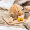 猫にナッツ類を与えるのは危険!種類や対策について