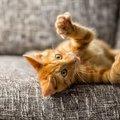 猫が爪を立てるのはどんなとき?