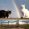 愛猫が亡くなりペットロス…落ち込まない為の考え方