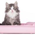猫のトイレトレーニングを上手に進めるコツとは?