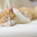 猫の一日の行動に密着!起床時間や餌の回数から生活を見直そう