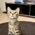 愛猫に『惚れ直す瞬間』ランキングTOP5!