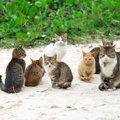 猫の譲渡会の内容と参加方法について