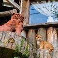 最新の猫カフェ情報@沖縄!サーバルキャットに会えるお店も♪