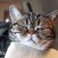 猫が『ぶすっとしているとき』の気持ち4つ