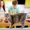 可愛い愛猫に食べさせたい手作りおやつ♪