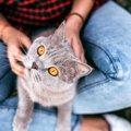 猫の座る位置で分かる飼い主への信頼度