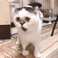 深夜に緊急会見を開いた猫さんが可愛いと話題♡