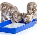 猫の下痢が臭い9の原因と3つの対策