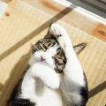 猫がストレスを感じた時に起こる体の変化3つ