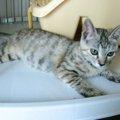 友人の猫のふるさと『横浜市動物愛護センター』を訪ねてみました!