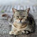 猫を不快にさせる飼い主の行動5つ!嫌がっているサインを見逃さない…