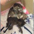段ボールに捨てられ、台風の中を必死に生き延びた子猫たち