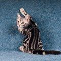 猫の嫌いなものを知って猫と仲良くなる