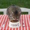 猫用アカナはどんなキャットフード?特徴や成分、おすすめのポイント