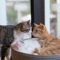 猫カフェがより楽しくなる!猫カフェの猫にモテる極意8つ
