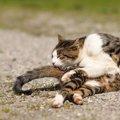 猫が柔らかい理由と犬との違い