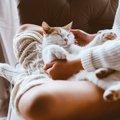 新型コロナウイルスから愛猫を守る!ペットの安全をキープしましょう