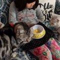 「アミューズパーク郡山」にある猫カフェで、自由気ままな純血種とま…
