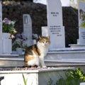 猫の火葬の種類や価格、タイミングや業者の探し方について