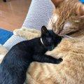 人の優しさに助けられて、車のボンネットから救出!黒猫の「ネロ」が…