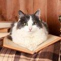 猫を賃貸で飼うための注意点や工夫