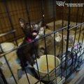 猫屋敷から救出された黒子猫。感染症にかかっていても元気いっぱい!