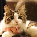 『あるある』ふわふわな猫にしたくなる6つのこと