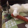 猫に『一人遊び』を覚えさせたほうがいい理由5つ