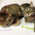 『すーさん、ふーさん』里親譲渡会で出会った2匹の猫との暮らし