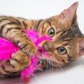 猫に人気な遊び道具4選とおすすめ商品