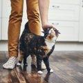 猫が『飼い主の足元をぐるぐる回る』時に考えられること4つ
