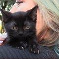 山林から子猫の鳴き声!保護された黒猫に『水頭症』の疑いが…