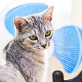 暑い夏…猫の暑さ対策に扇風機を使っても良い?