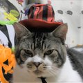 ハロウィンの下準備♪でも猫ちゃんは…